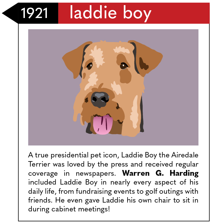 A true presidential pet icon, Laddie Boy the Airedale Terrier was loved by the press and received regular coverage in newspapers. Warren G. Harding included Laddie Boy in nearly every aspect of his daily life, from fundraising events to golf outings with friends. He even gave Laddie his own chair to sit in during cabinet meetings!