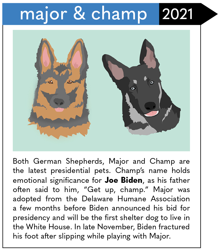 """Both German Shepherds, Major and Champ are the latest presidential pets. Champ's name holds emotional significance for Joe Biden, as his father often said to him, """"Get up, champ."""" Major was adopted from the Delaware Humane Association a few months before Biden announced his bid for presidency and will be the first shelter dog to live in the White House. In late November, Biden fractured his foot after slipping while playing with Major."""
