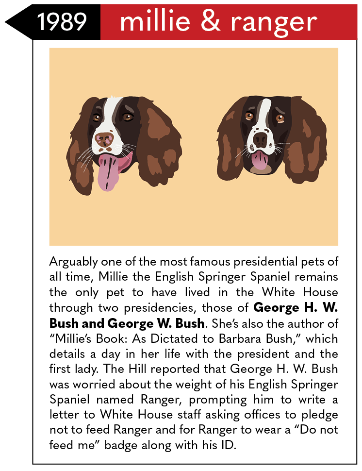 """Arguably one of the most famous presidential pets of all time, Millie the English Springer Spaniel remains the only pet to have lived in the White House through two presidencies, those of George H. W. Bush and George W. Bush. She's also the author of """"Millie's Book: As Dictated to Barbara Bush,"""" which details a day in her life with the president and the first lady. The Hill reported that George H. W. Bush was worried about the weight of his English Springer Spaniel named Ranger, prompting him to write a letter to White House staff asking offices to pledge not to feed Ranger and for Ranger to wear a """"Do not feed me"""" badge along with his ID."""