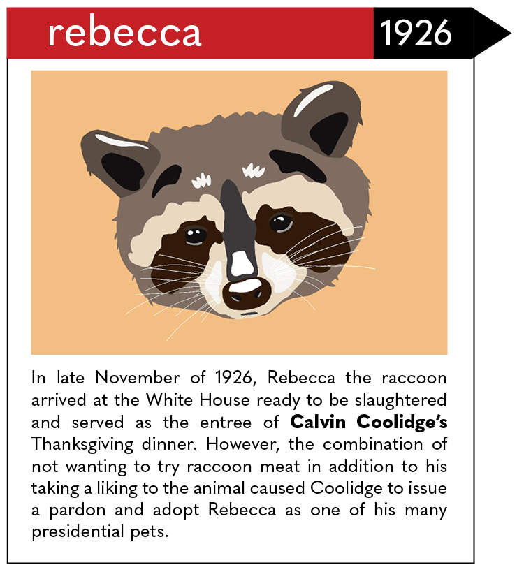 In late November of 1926, Rebecca the raccoon arrived at the White House ready to be slaughtered and served as the entree of Calvin Coolidge's Thanksgiving dinner. However, the combination of not wanting to try raccoon meat in addition to his taking a liking to the animal caused Coolidge to issue a pardon and adopt Rebecca as one of his many presidential pets.