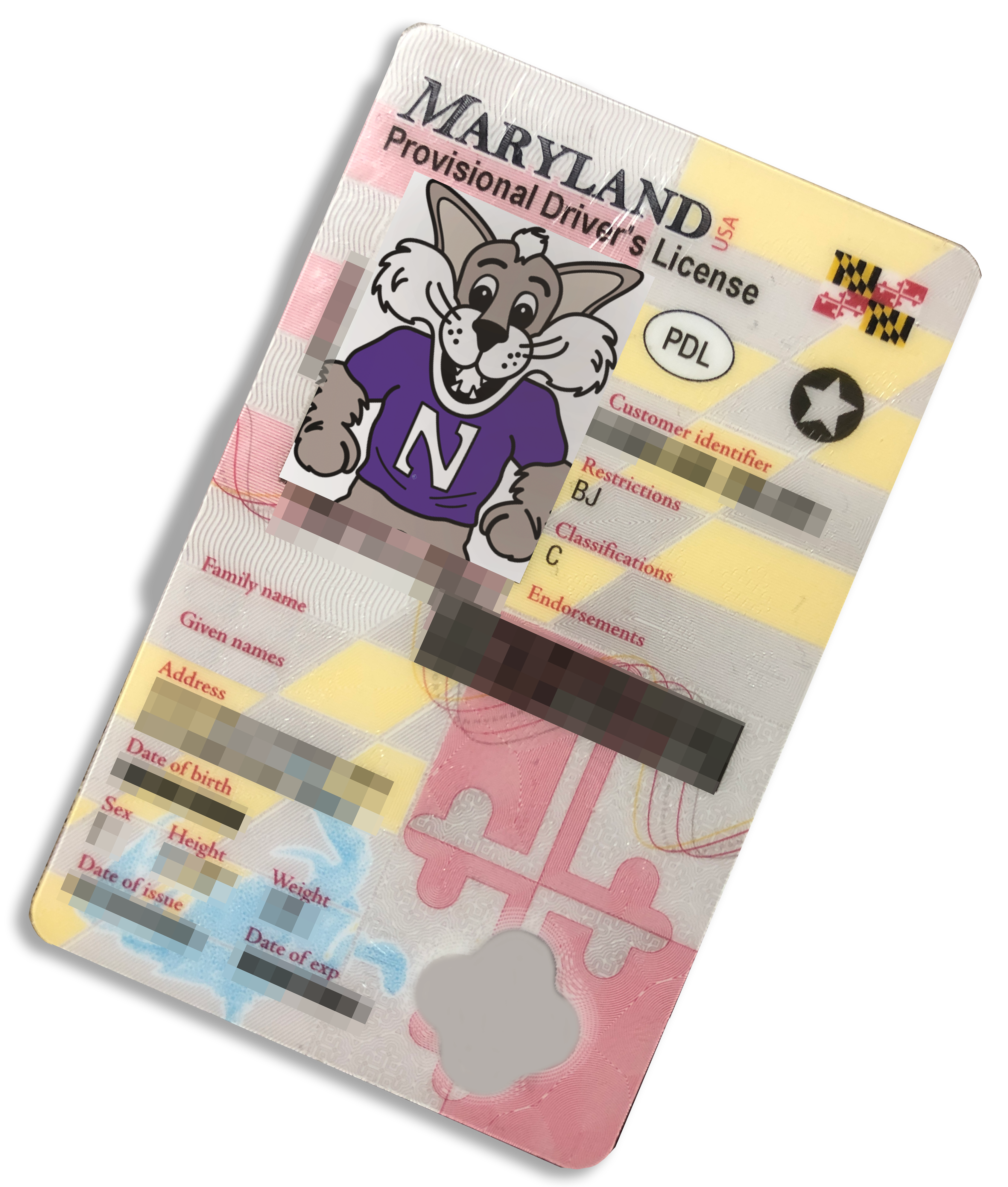 A Maryland driver's license with Willy the Wildcat's photo on it